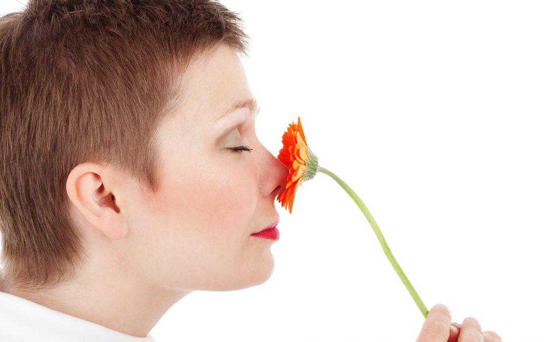 Der Geruchssinn – Multitalent Nase